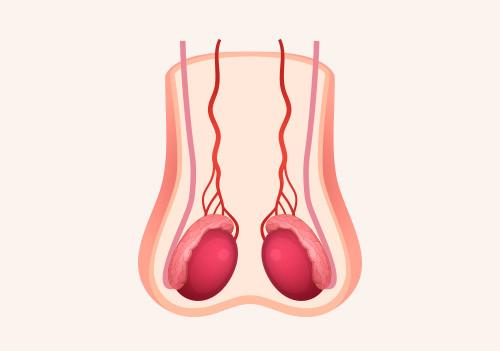 Biopsia testicular (TESE)